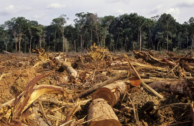 Amazon Rainforest in Brazil the most dangerous place in the world for environmental activists