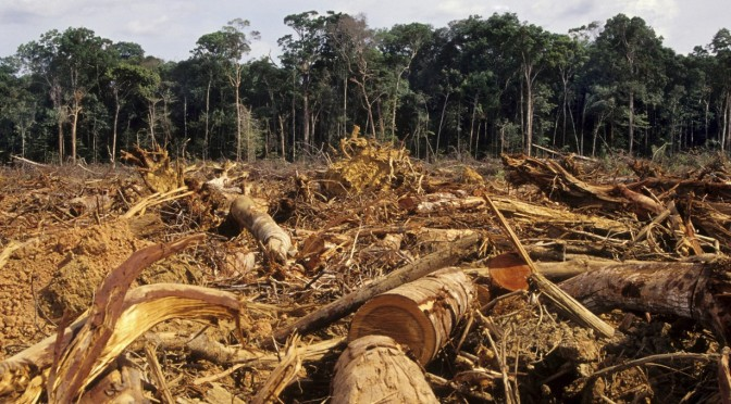 Natural Resources Lifestyle Society Death And Heartache In - Natural resources of brazil