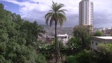 Palm trees and tower-blocks