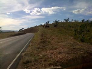 Horses on the roadside to Lapinha da Serra