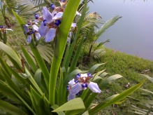 There are 5,000 types of flowers at Inhotim, including this blue tiger-print flower.